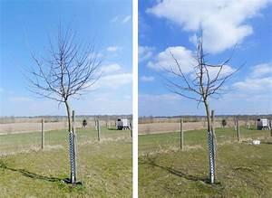 Apfelbaum Wann Schneiden : apfelbaum schneiden obstbaumschnittschule ~ Frokenaadalensverden.com Haus und Dekorationen