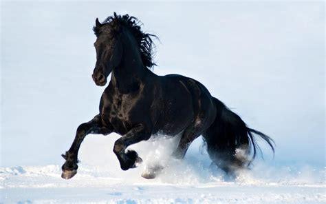 Black Snow White Beautiful Horse Running 3840x2400