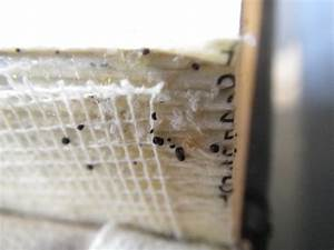 bed bug eggs and feces in book binding bed bugs With bed bug poop