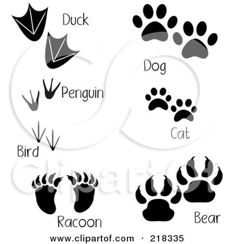 digital collage of duck penguin bird raccoon dog cat and bear tracks with words posters