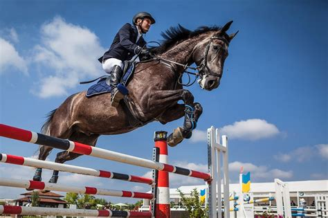 showjumping horses horse level ever jumping enjoy jumps awe inspiring chance watching walk course ve had