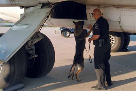 explosives detection    dogs airport