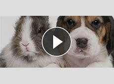 Lustiges Video Tiere erschrecken sich grundlos