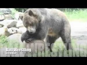 Gorilla Vs Bear :: VideoLike