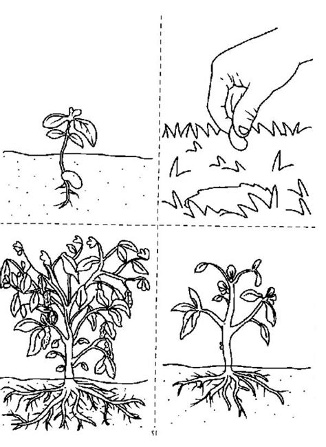 growing plants coloring page coloring sky