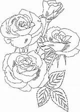 Coloring Bouquet Roses Rose Flower Flowers Drawing Sketch Printable Drawn Getdrawings Luna Sketches Colorluna sketch template