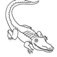 alligator zum ausmalen ausmalbilder ausmalbilder
