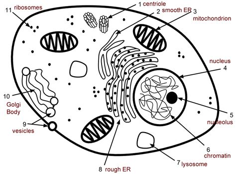cell label simple  complex answers coloring pages