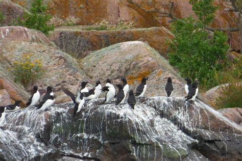 nabu nordhausen verein nordhaeuser ornithologen beringung