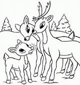 Deer Coloring Pages Baby Printable Cute Whitetail Buck Print Tailed Rated Colouring Skull Head Drawing Getcolorings Drawings Animal Mother Getcoloringpages sketch template