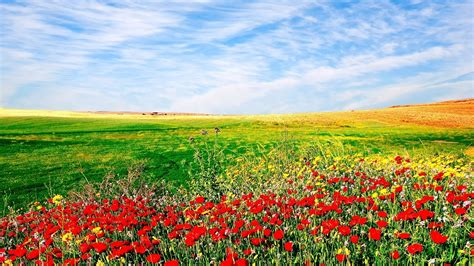 flower landscape images nature flowers sown field landscape sky wallpaper 1920x1080 136206 wallpaperup
