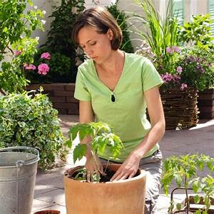 Patio Vegetable Plants Growing Instructions