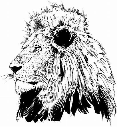 Coloring Lions Pages Lion Realistic Head Face
