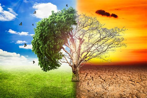Climate Change Impact Blamed For Major Changes To Nature