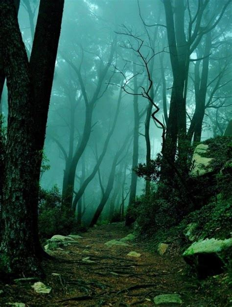 faerie forests  emerald green