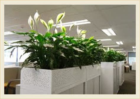 Plants For Bathroom With No Natural Light by Indoor Plants Design And Installation Interior Plants Dubai