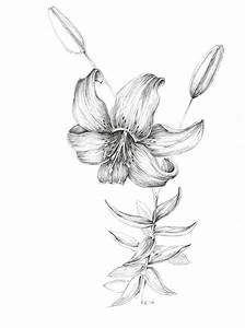 Tiger lily art print pen and ink flower sketch floral decor