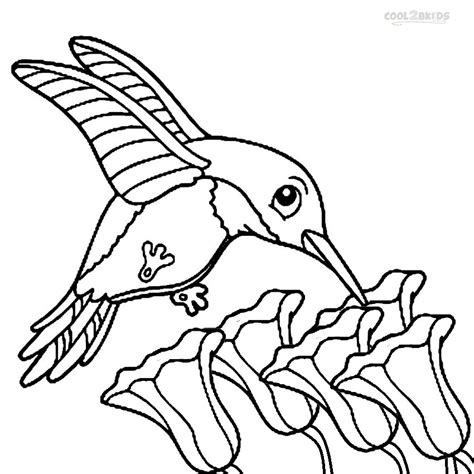 printable hummingbird coloring pages  kids coolbkids