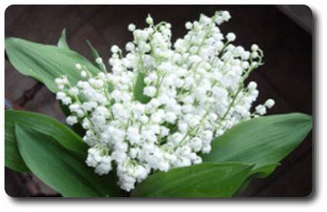1er mai fleuriste livre fleurs et brin de muguet porte bonheur