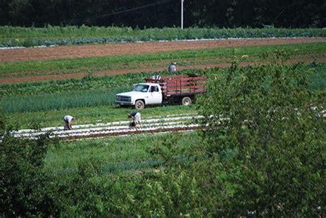 beautiful day   farm   season farmkings