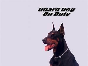 guard dog on duty wallpaper
