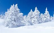 Snowy Covered Pine Tree Wallpaper