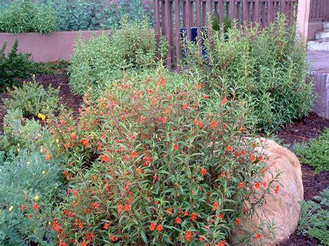 diplacus puniceus red monkey flower