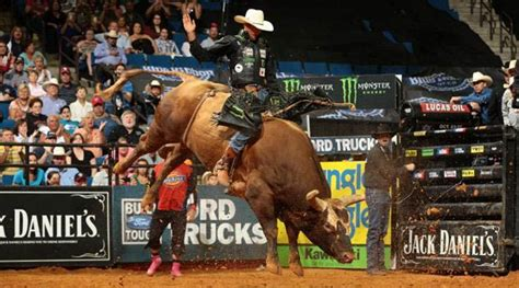cowboy beats bushwacker  bull  man  ride
