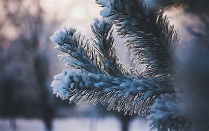 Winter 4k Snow Ultra Branch Leaf Wallpapers
