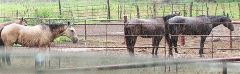rain horses horse beauty