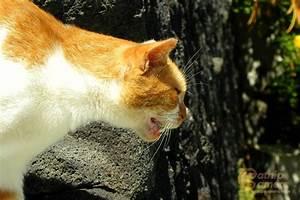 Ginger Cats   Catnip Camera