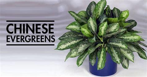 desk plants that don t need sunlight 12 aesthetic plants that don t require sunlight and can