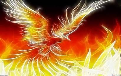 Phoenix Bird Desktop Wallpapersafari