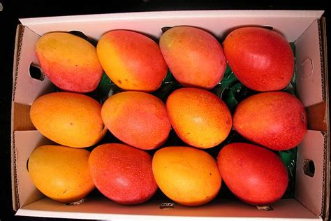 Types Mango Varieties