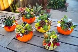 Mini Succulente Pas Cher : centre de table pas cher avec une citrouille succulente comment faire ~ Teatrodelosmanantiales.com Idées de Décoration
