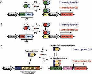 Gene Regulatable Lentiviral Vector System