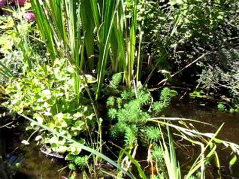 petit bassin de jardin petit bassin de jardin
