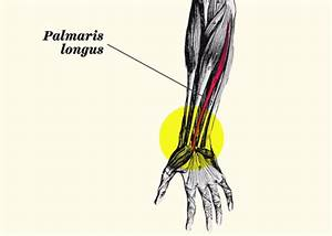 This Is What That Weird Vein In Your Wrist Is For
