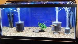 American Aquarium Products  U0026 Supply Ati Sponge Filters