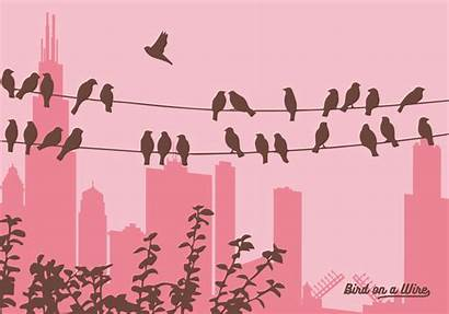 Wire Birds Graphics License