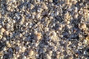 Besteht Sand Aus Muscheln : australien reisebericht shark bay ~ Kayakingforconservation.com Haus und Dekorationen