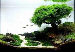 Aquarium Einrichten Beispiele : nano aquarium einrichten beispiele aquascaping pinterest aquariums nano aquarium and fish ~ Frokenaadalensverden.com Haus und Dekorationen