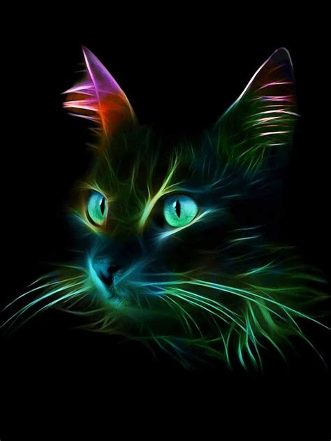 neon animals images  pinterest baby kittens