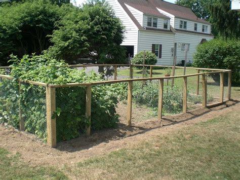 Garden Fence by Veggie Garden Fence Around Chicken Coop To Keep Dogs