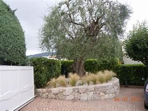 olivier et graminees olivier pinterest graminees With amenagement terrasse exterieure appartement 5 bambou en pot brise vue naturel et deco sur la terrasse