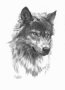 Tatouage Loup Graphique : image image de tete de loup tricot ~ Mglfilm.com Idées de Décoration