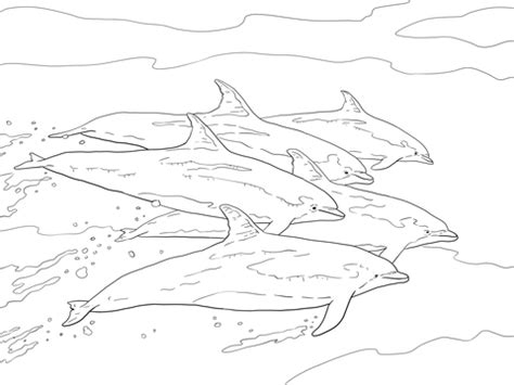 top  cute dolphin colouring pages   printable
