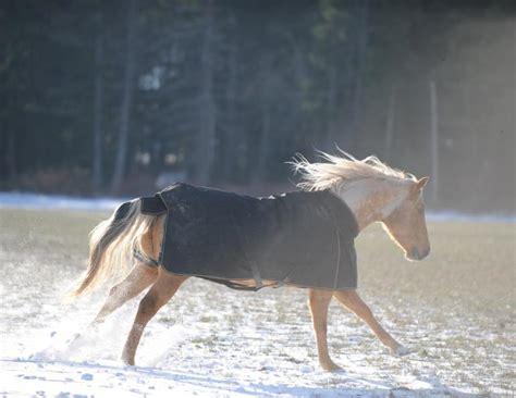 weather cold horses blanket horse robin duncan blanketing