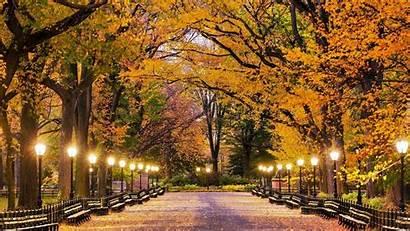 Central Tapety Nowojorskim Parku Aleja