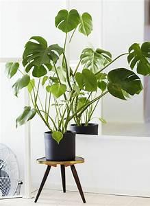Blühende Zimmerpflanzen Pflegeleicht : zimmerpflanzen bilder gem tliche deko ideen mit topfpflanzen ~ Michelbontemps.com Haus und Dekorationen